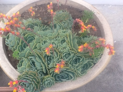 Cluster of plants