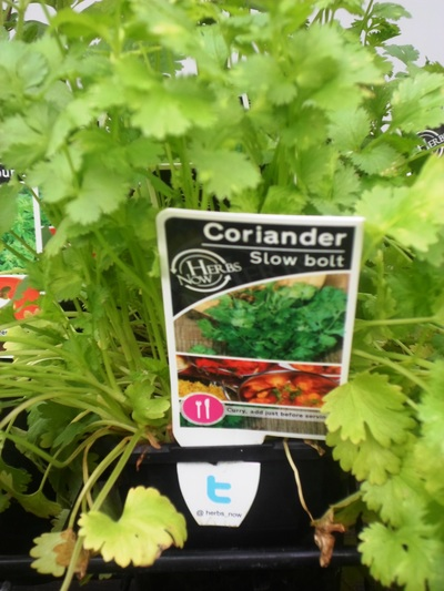 Packet Of Coriander Seeds