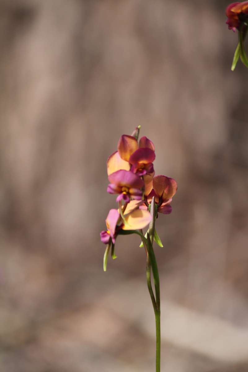 Can you name this wild flower?